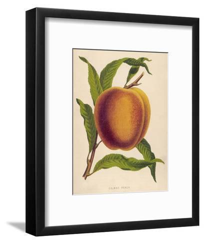 A Salway Peach--Framed Art Print