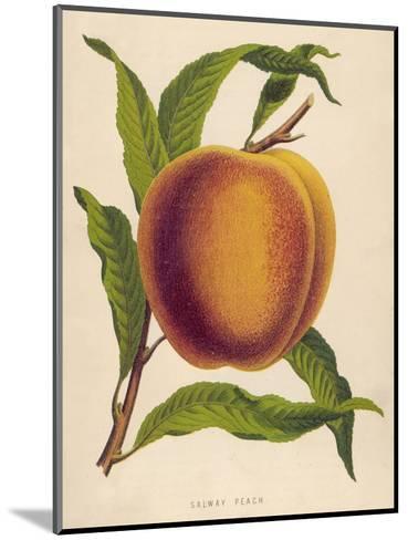 A Salway Peach--Mounted Giclee Print
