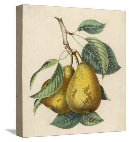 A Pair of Pears--Stretched Canvas Print