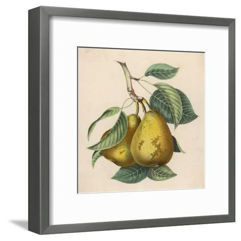 A Pair of Pears--Framed Art Print