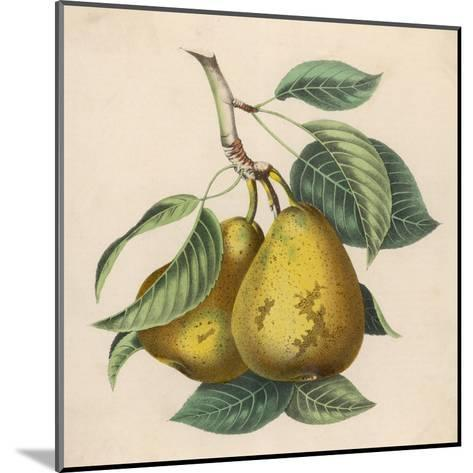 A Pair of Pears--Mounted Giclee Print