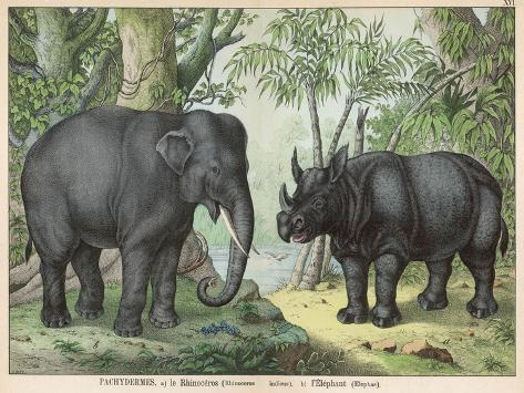 An Indian Elephant and a Rhinoceros--Stretched Canvas Print
