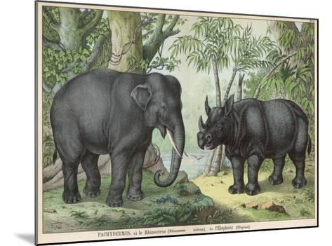 An Indian Elephant and a Rhinoceros--Mounted Giclee Print