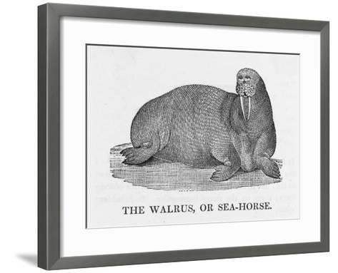 Walrus--Framed Art Print