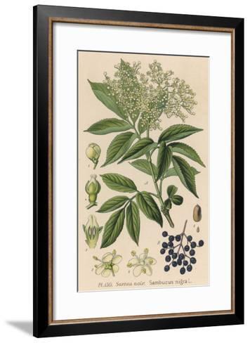 Common Elder--Framed Art Print