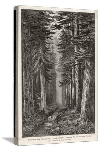 Douglas Firs and Gigantic Cedar--Stretched Canvas Print