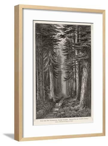 Douglas Firs and Gigantic Cedar--Framed Art Print