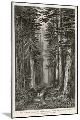 Douglas Firs and Gigantic Cedar--Mounted Giclee Print