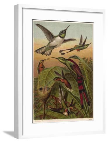 Humming Birds--Framed Art Print