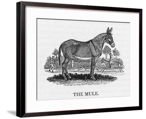 Mule--Framed Art Print