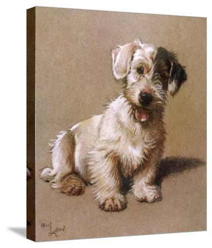 Sealyham Terrier with its Tongue Hanging Out--Stretched Canvas Print