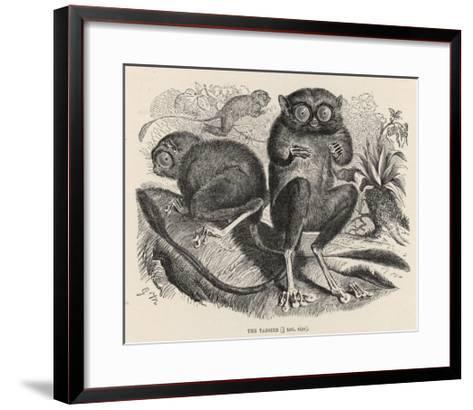 Tarsier--Framed Art Print