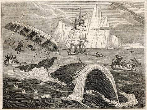 The Crew in Danger a Small Whaling Vessel Is Overturned by a Whale--Stretched Canvas Print