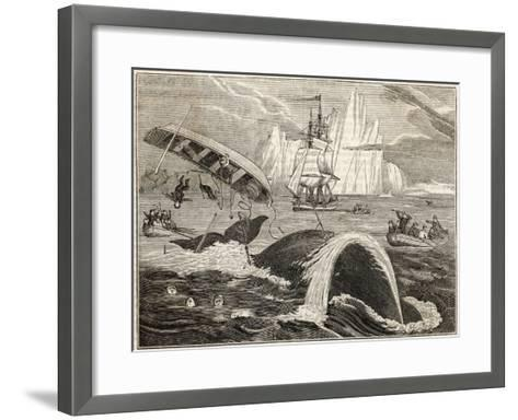 The Crew in Danger a Small Whaling Vessel Is Overturned by a Whale--Framed Art Print