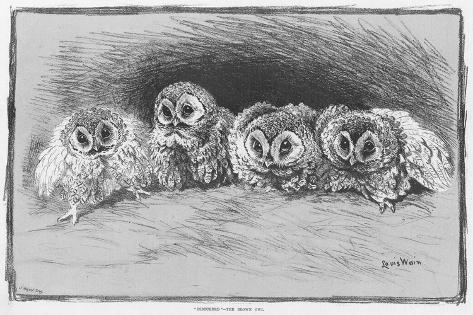 Study of Brown Owls by Louis Wain--Stretched Canvas Print