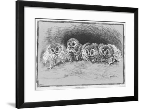 Study of Brown Owls by Louis Wain--Framed Art Print