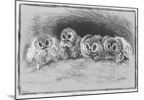 Study of Brown Owls by Louis Wain--Mounted Giclee Print