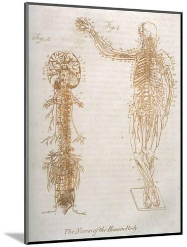 The Nervous System--Mounted Giclee Print