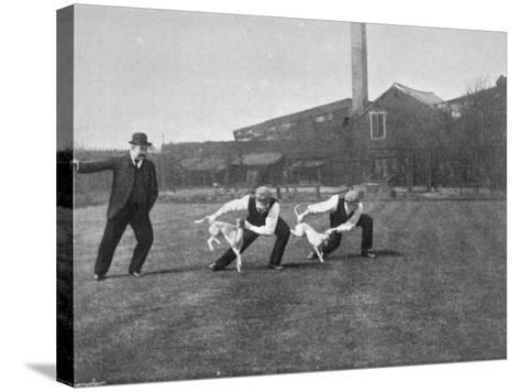 Two Owners Demonstrate How Whippets are Started in a Race : This Is known as 'Flapping'--Stretched Canvas Print