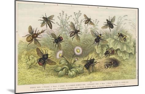 Various Types of Bee--Mounted Giclee Print