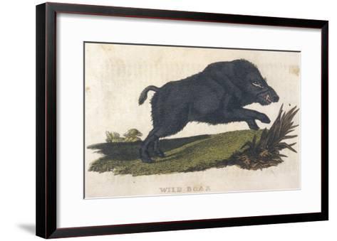 Wild Boar 1814--Framed Art Print