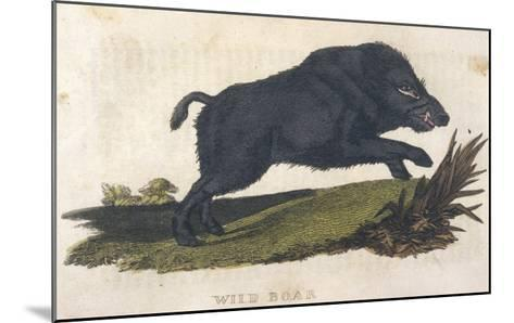 Wild Boar 1814--Mounted Giclee Print