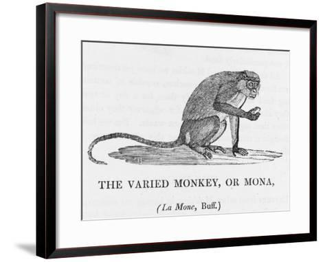 Varied Monkey--Framed Art Print