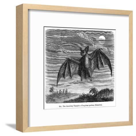 Vampire Bat--Framed Art Print