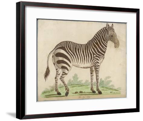 Zebra--Framed Art Print