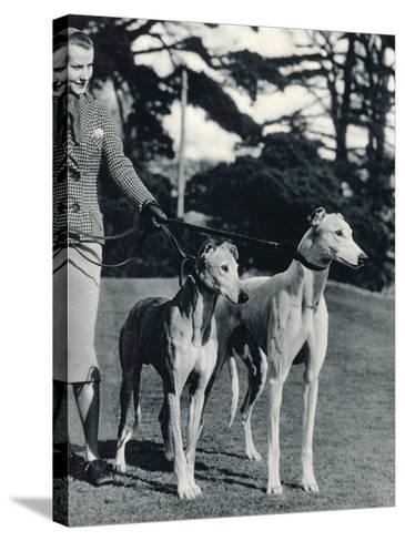 A Smart Young Woman Taking Two Magnificent, Muscular Greyhounds for their Daily Exercise--Stretched Canvas Print