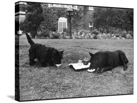 Doggie Afternoon Tea--Stretched Canvas Print