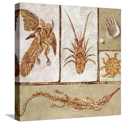 Close-Up of Various Fossils--Stretched Canvas Print