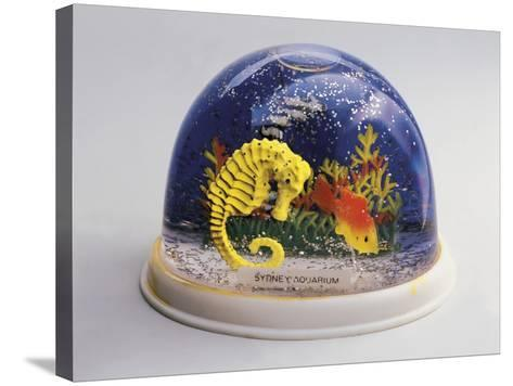 Close-Up of Figurines of a Sea Horse and a Fish in a Snow Globe--Stretched Canvas Print