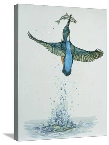 Close-Up of a Common Kingfisher Gripping a Fish (Alcedo Atthis)--Stretched Canvas Print