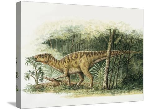 Rhabdodon Dinosaur Eating Plants in the Forest--Stretched Canvas Print
