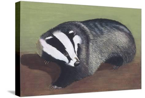European Badger (Meles Meles), Illustration--Stretched Canvas Print