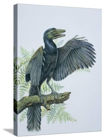 Close-Up of an Archaeopteryx Perching on a Branch (Archaeopteryx Lithographica)--Stretched Canvas Print