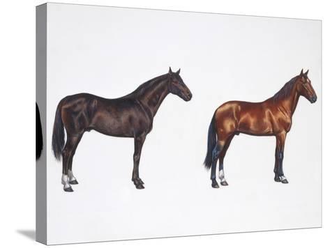 Kladruber Horse and Furioso-North Star Horse (Equus Caballus), Illustration--Stretched Canvas Print