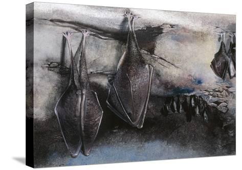 Greater Horseshoe (Bat Rhinolophus Ferrumequinum), Illustration--Stretched Canvas Print