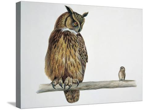 Close-Up of an Eurasian Eagle Owl (Bubo Bubo) Perching on a Branch with an Eurasian Pygmy Owl--Stretched Canvas Print