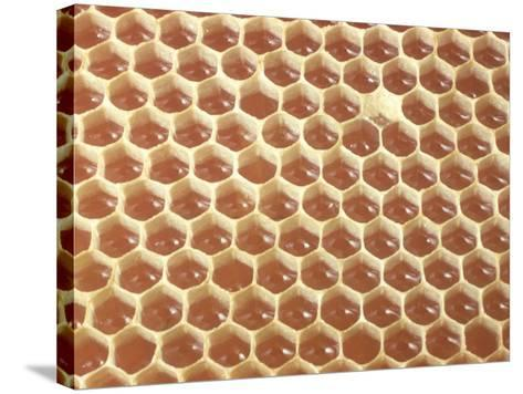 Honeycomb Filled with Honey-Jeff Foott-Stretched Canvas Print