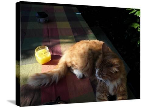 Orange Cat at a Picnic-Krystal South-Stretched Canvas Print