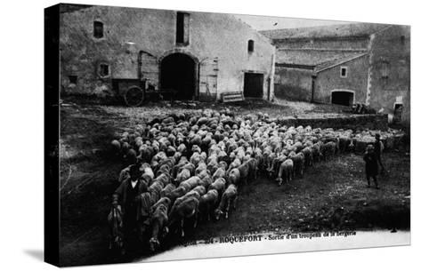 """""""Aveyron.394.Roquefort, Leaving a Flock of Sheep """"--Stretched Canvas Print"""