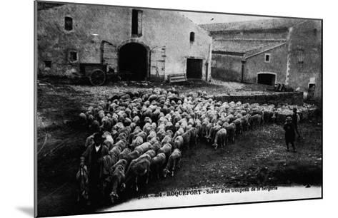 """""""Aveyron.394.Roquefort, Leaving a Flock of Sheep """"--Mounted Giclee Print"""