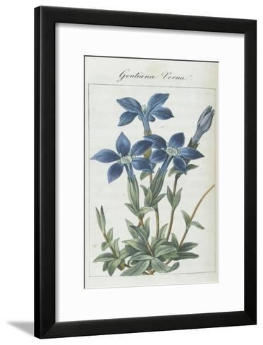 Almanach de Flore : Gentiane Verna-Pancrace Bessa-Framed Art Print