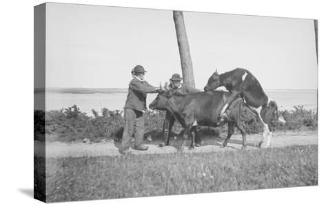 Vache et taureau--Stretched Canvas Print