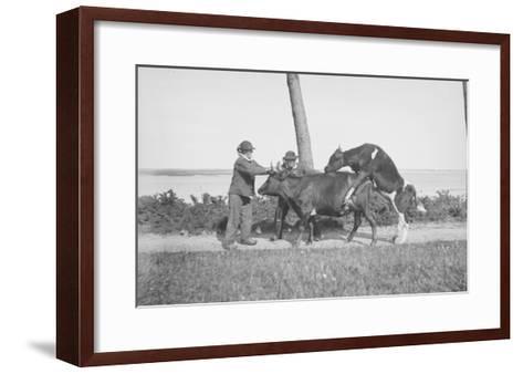 Vache et taureau--Framed Art Print
