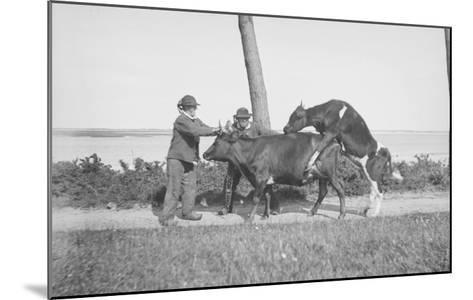 Vache et taureau--Mounted Giclee Print