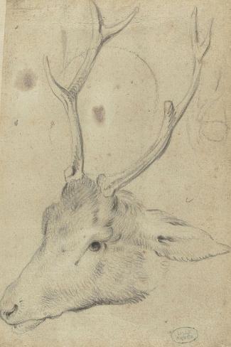Tête de cerf--Stretched Canvas Print