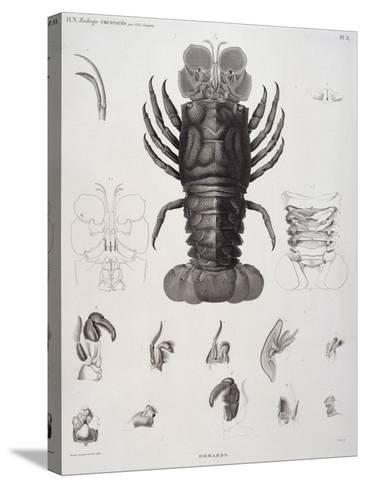 Description de l'Egypte : Zoologie, crustacé : homard-Salvadore Tresca-Stretched Canvas Print